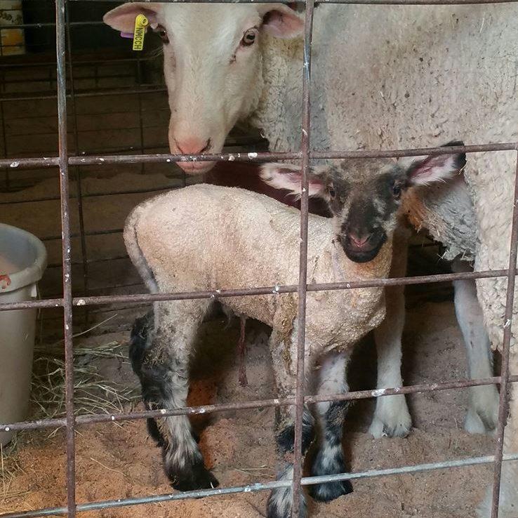 Farm and Livestock